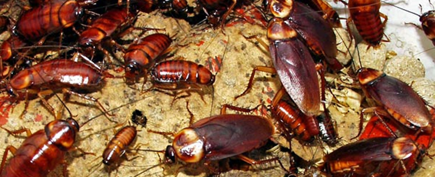 HOME COCKROACH CONTROL TREATMENT