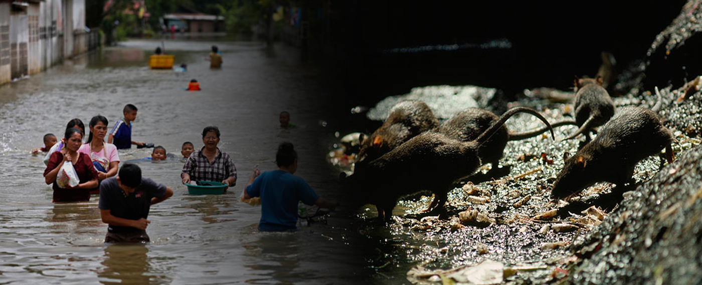 Protect yourself from Leptospirosis this Rainy season