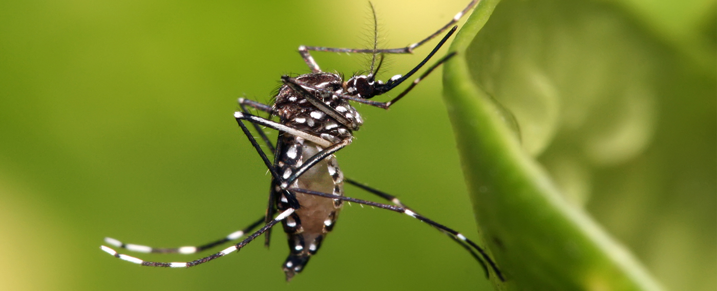 Protect your family from dengue today!
