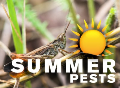 summer_pests