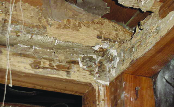 Save Your Home From Termites By Recognizing Three